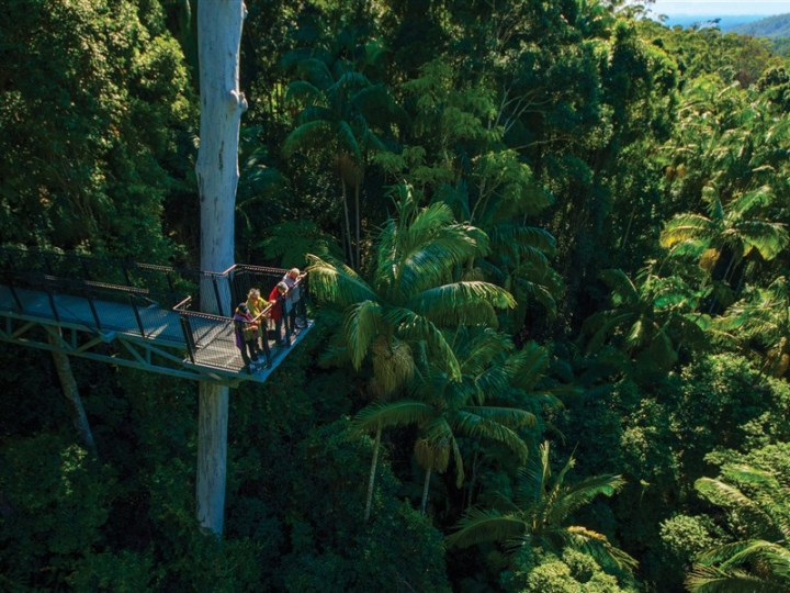 15. Tamborine Rainforest Skywalk