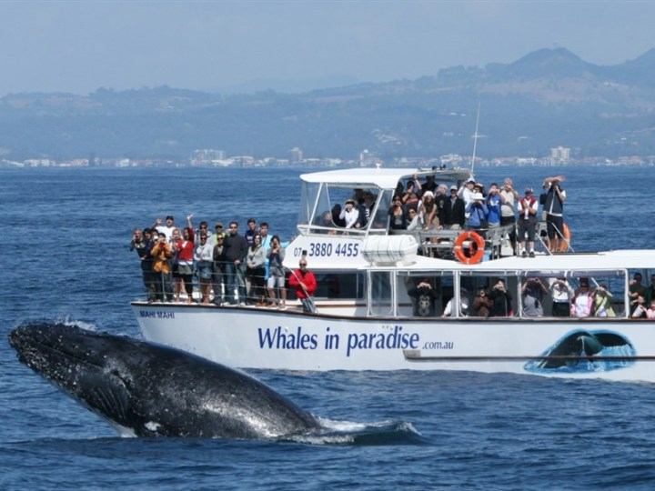 6. Whale Watching